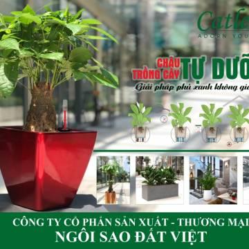 Công ty CP SX TM Ngôi Sao Đất Việt