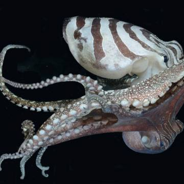 Vũ Thế Thành: Tình bạch tuộc, đẹp đến thế là cùng!