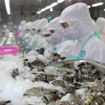 Xuất khẩu tôm sang EU dự báo khả quan