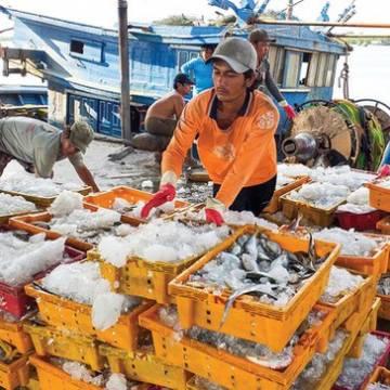 Đề nghị EC sớm gỡ bỏ 'thẻ vàng' cho thủy sản của Việt Nam