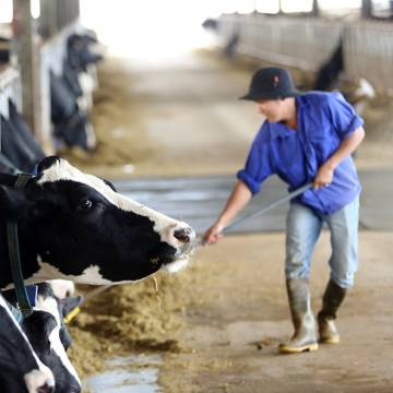 Vinamilk hoàn tất thương vụ thâu tóm công ty mẹ sữa Mộc Châu