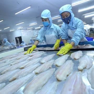 Năm nay, xuất khẩu cá tra dự kiến đạt 2,3 tỷ USD