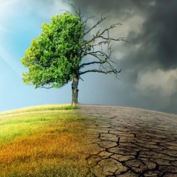 Nông nghiệp tái sinh và thế đảo ngược biến đổi khí hậu?