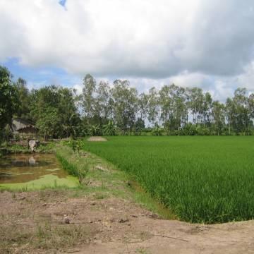 Đất giồng, cơ may cho vùng nhiễm mặn châu thổ