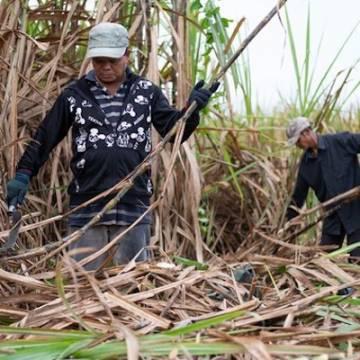 Chính phủ không đồng ý gia hạn ATIGA cho ngành mía đường