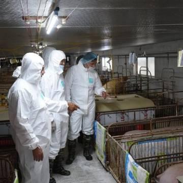 Thái Lan sẽ giảm xuất khẩu thịt heo sang Việt Nam