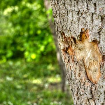 Miếng vỏ cây