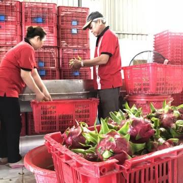 Giao thương trực tuyến sản phẩm trái cây Việt Nam – Trung Quốc