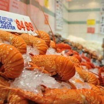 Úc ngừng xuất khẩu tôm hùm cho Trung Quốc