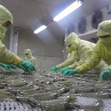 Bộ Nông nghiệp cảnh báo việc Trung Quốc siết nhập khẩu thủy sản