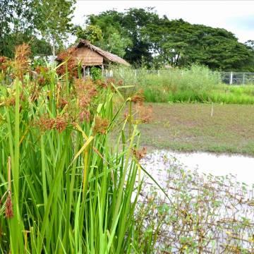 Tâm sự mang tên lúa mùa Tư Việt