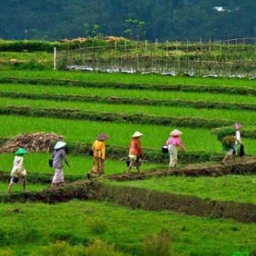 Indonesia phát triển du lịch nông nghiệp