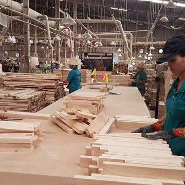 Ngành gỗ đứng ngồi không yên vì đầu tư núp bóng