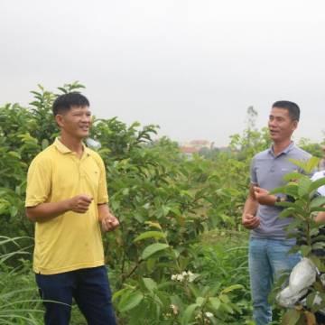 Chàng trai 8X khởi nghiệp nông nghiệp thuận tự nhiên