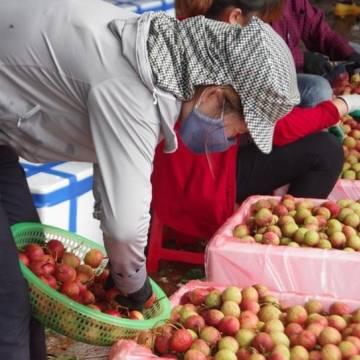 Thương nhân Trung Quốc không thể nhập cảnh vùng vải thiều vì dịch