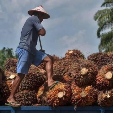 Xuất khẩu dầu cọ thô của Campuchia tăng mạnh