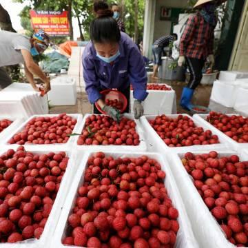 Tại sao Trung Quốc kiểm hóa 100% trái cây xuất khẩu từ Việt Nam?