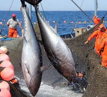 Việt Nam vượt Thái Lan trở thành nhà cung cấp cá ngừ lớn nhất cho Israel