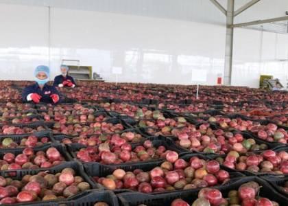 EVFTA – Cơ hội lớn cho xuất khẩu rau quả mở rộng thị trường